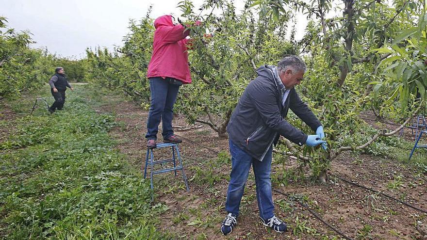 Los precios de la fruta de verano se hunden un 20 % en el campo