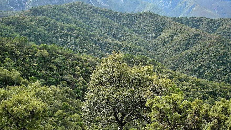 La Sierra de las Nieves confía en que el parque nacional traiga oportunidades económicas