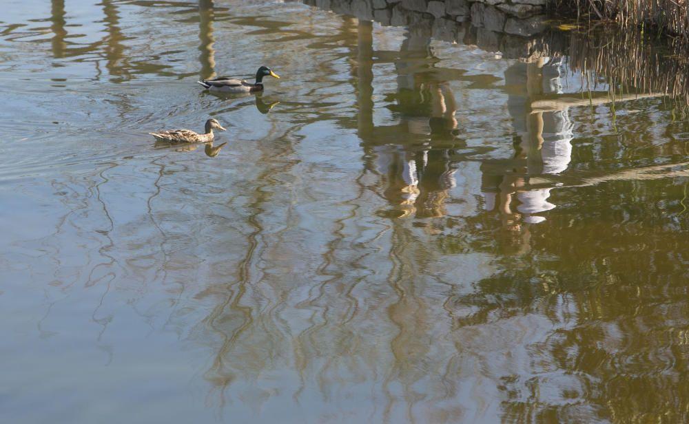 El parque La Marjal, hábitat para un centenar de especies de aves en la playa de San Juan de Alicante
