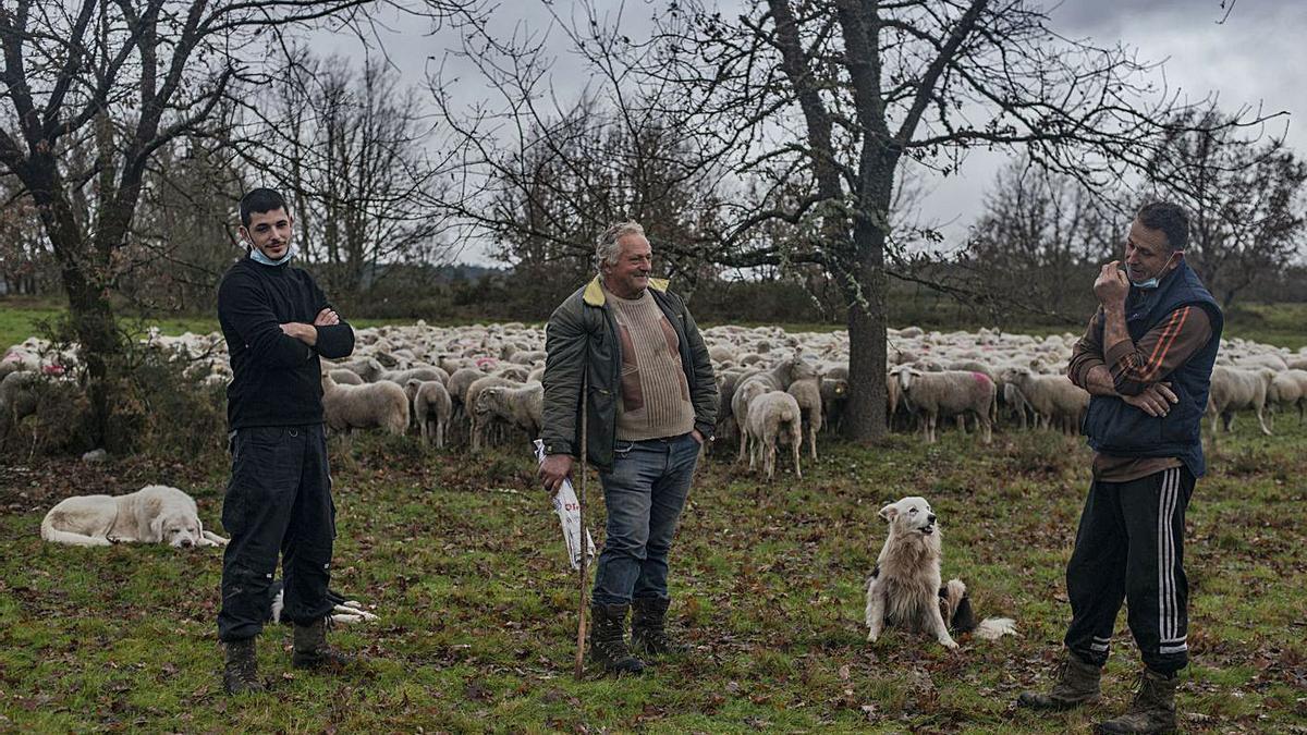 Samuel, Alfonso y José, junto a su cabaña de ovejas en A Venda Nova, Taboadela