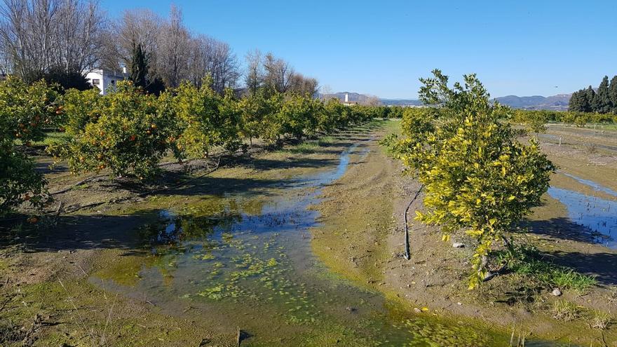Agricultores reclaman la supervisión permanente para acabar con las inundaciones en el marjal de Almardà