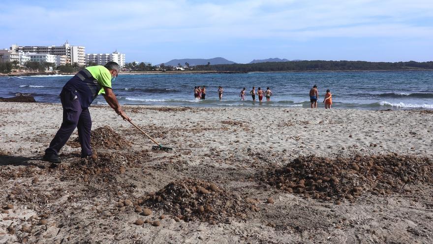 Manacor municipaliza la gestión de playas y reduce hamacas y sombrillas a la mitad