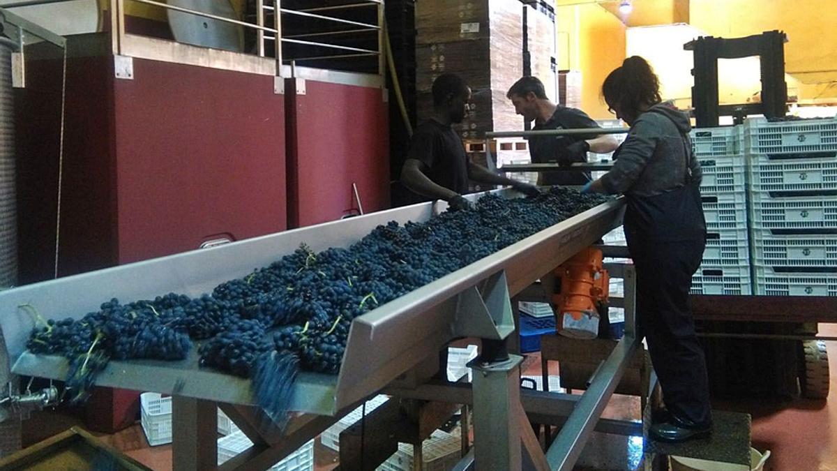 Producción de vino tinto en una bodega de Toro. | M. J. C.