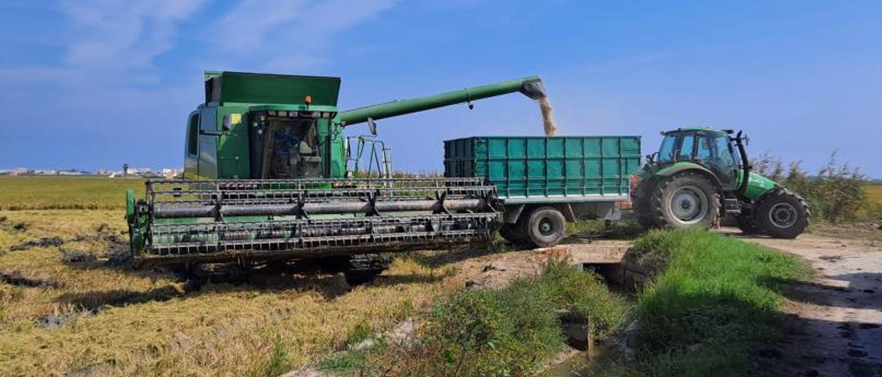 Una segadora en pleno trabajo de recolección en un campo de arroz suecano.   LEVANTE-EMV