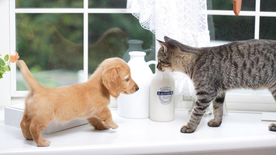 ¿Cómo tener un gato en casa si ya tengo un perro? Te contamos cómo hacerlo