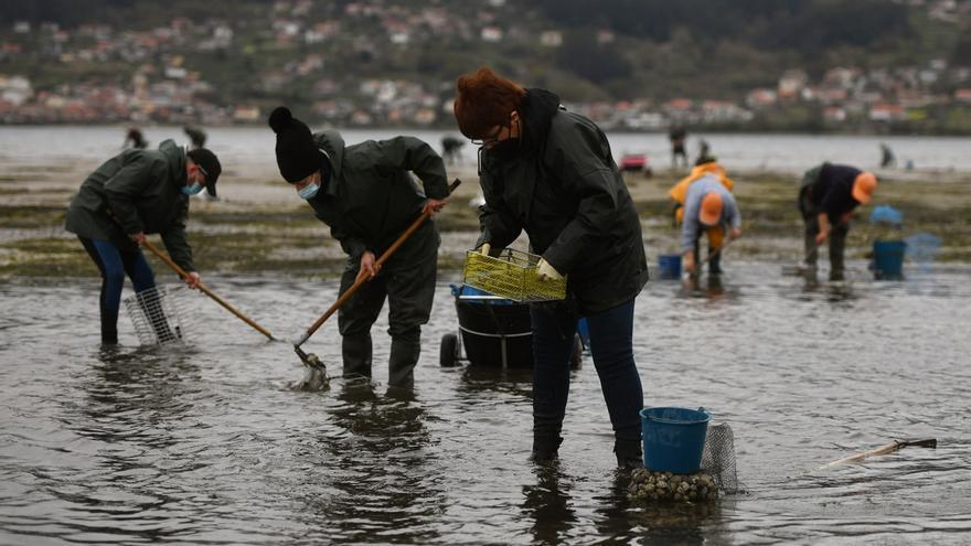Mar reordena las áreas de marisqueo en Lourido y Placeres y crea dos subzonas B