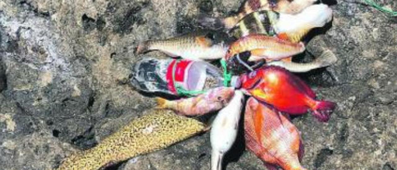 Imagen del pescado requisado a los pescadores furtivos.