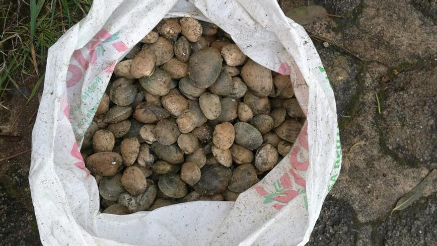 Interceptan en Vigo a dos furtivos con más de 6 kilos de almeja