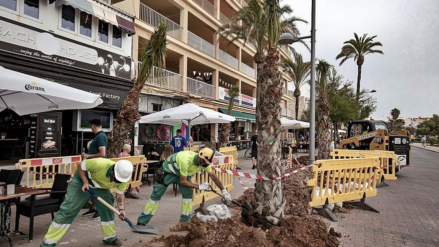 Cort renuncia a la siembra de tamariscos en la primera línea de la Platja de Palma