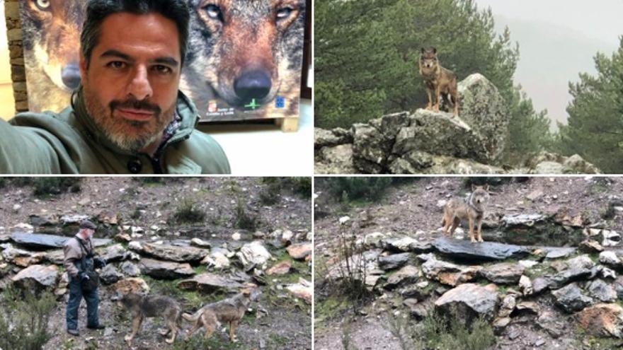 """""""Jabalíes versus lobos"""": la dicotomía de Zamora que presenta esta noche el reportero Jalis de la Serna"""