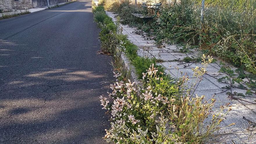 Vecinos de Figueiroa de Abaixo denuncian que la maleza invade acera y vial