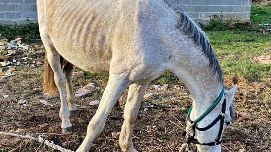 Dos investigados en Cerceda y A Coruña por un caballo con signos de desnutrición