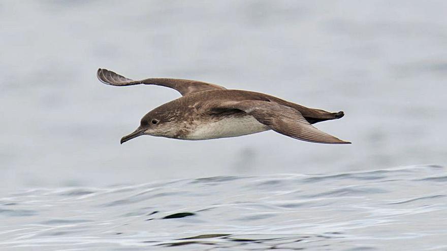 El Ceida impulsa proyectos para crear una Zona de Especial Protección para las aves en el Golfo Ártabro