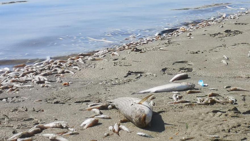 Los vertidos de materia orgánica y nutrientes, claves en la crisis del Mar Menor