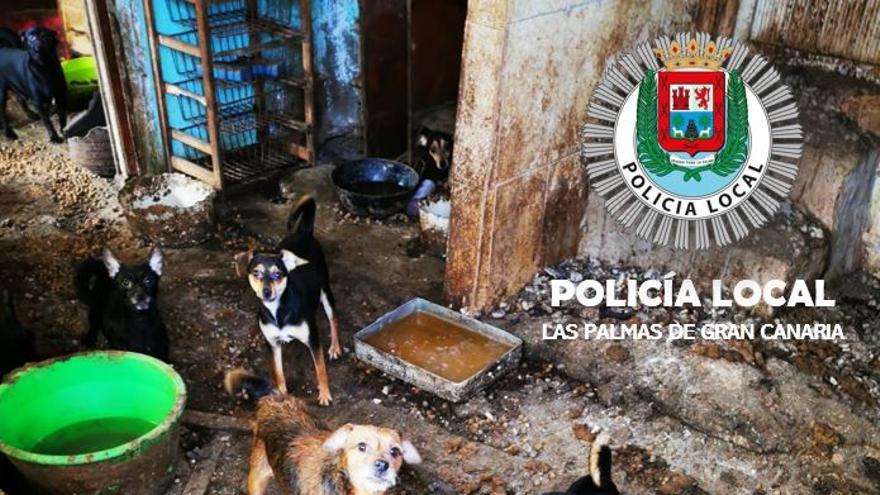 Denunciado por abandonar a 14 perros durante seis semanas en Pedro Hidalgo