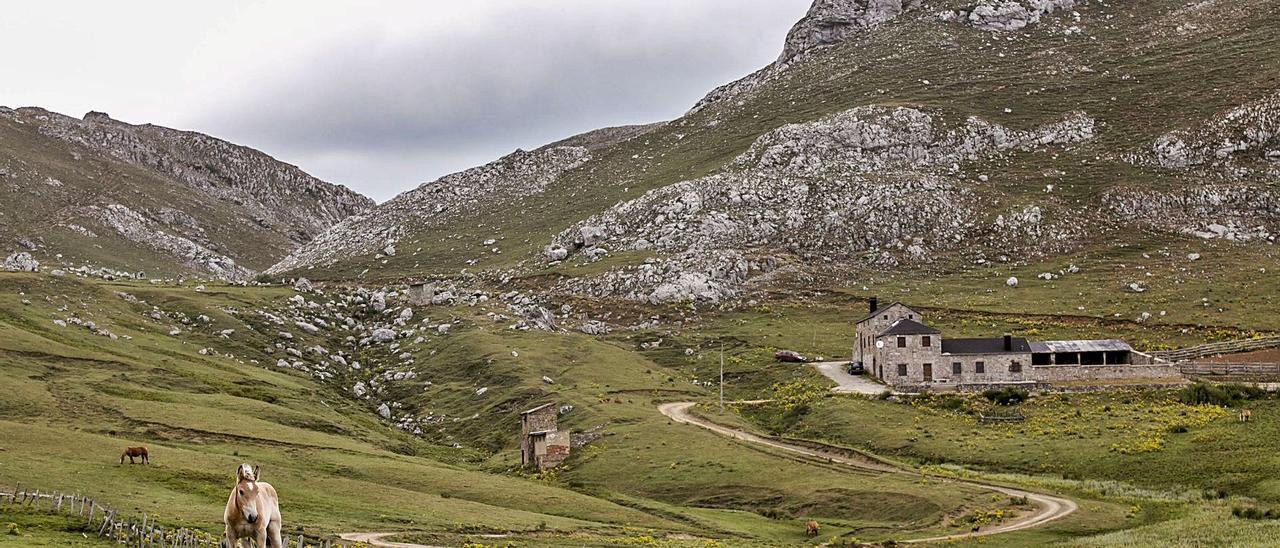 Caballos pastando en el puerto de Pinos, con Casa Mieres al fondo. | Irma Collín