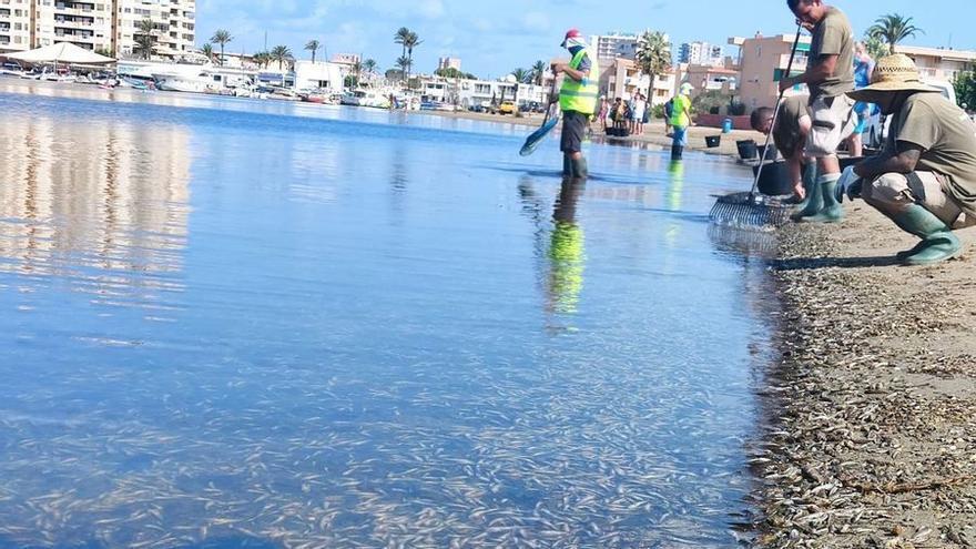 Cierran ocho playas del Mar Menor por la aparición de peces muertos