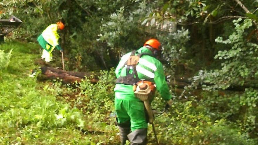 Augas de Galicia inicia la limpieza de un tramo del río Rons en San Caetano, Alba