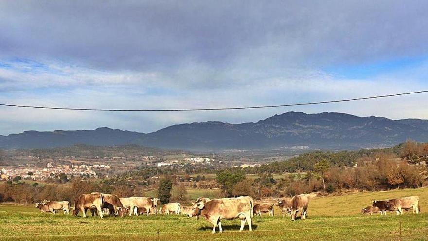 Olvan acull una prova per vigilar els ramats de bestiar amb drons