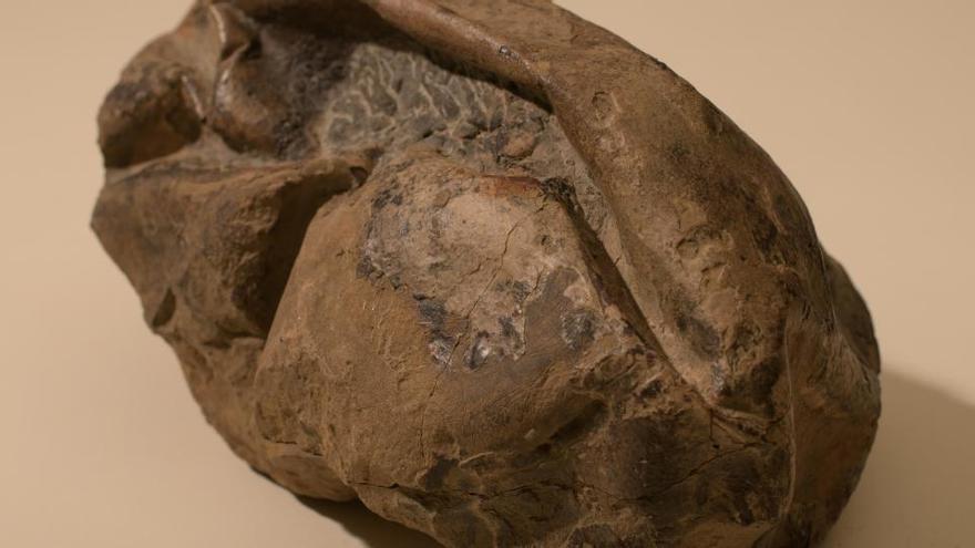 Descubren en Brasil el fósil de una especie de dinosaurio desconocida