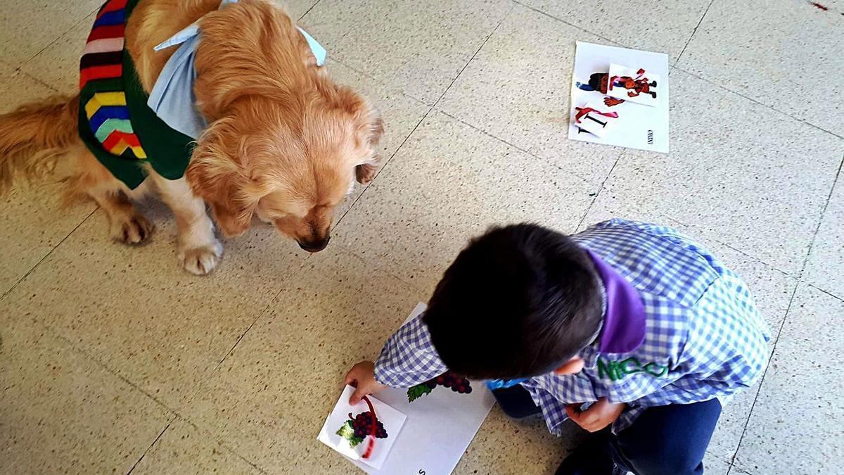 Una sesión de terapia canina en el CEIP Mestre Ramiro Sabell de Ponteareas.   | // D.P.
