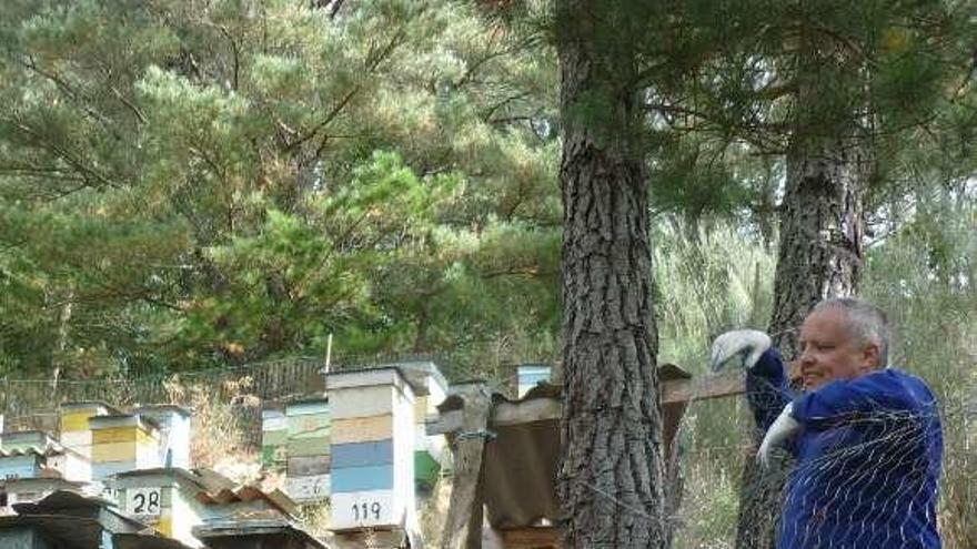 """""""No hay miel"""", claman los apicultores del Suroccidente ante su peor año"""