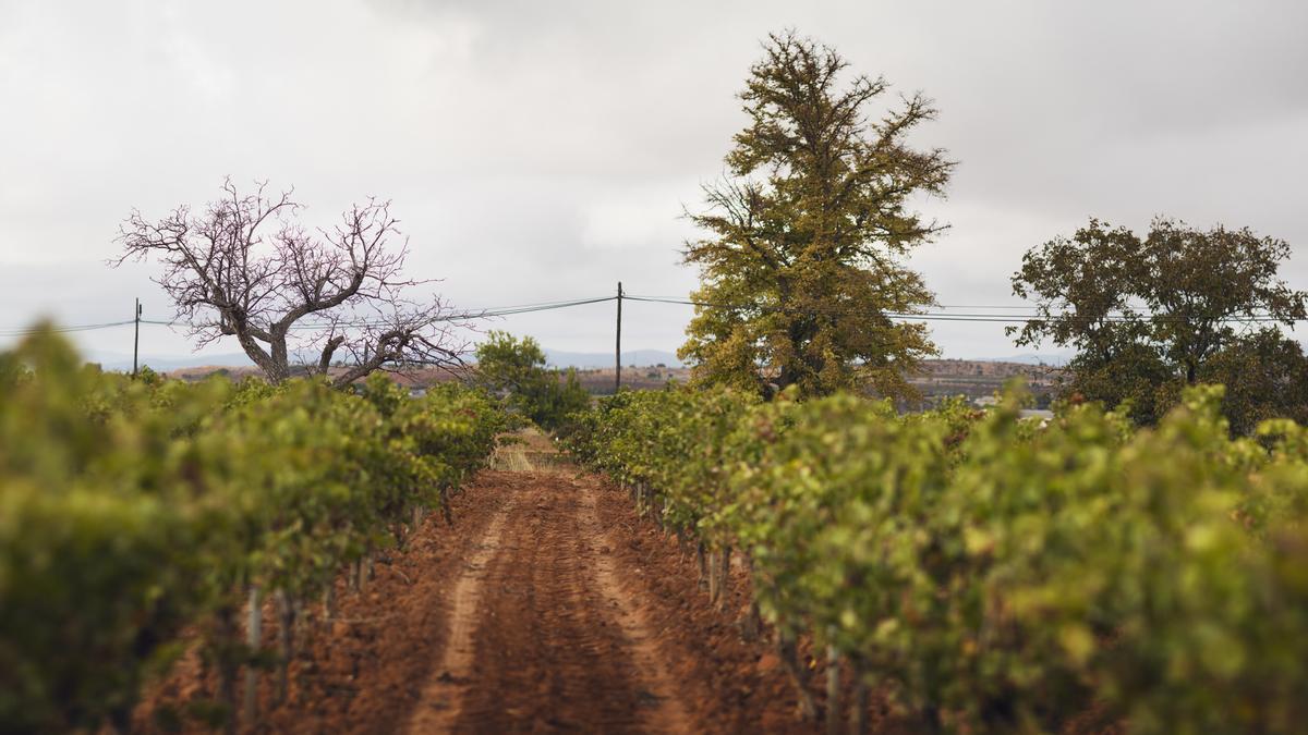 Descubre las siete bodegas más icónicas de la Comunitat Valenciana.