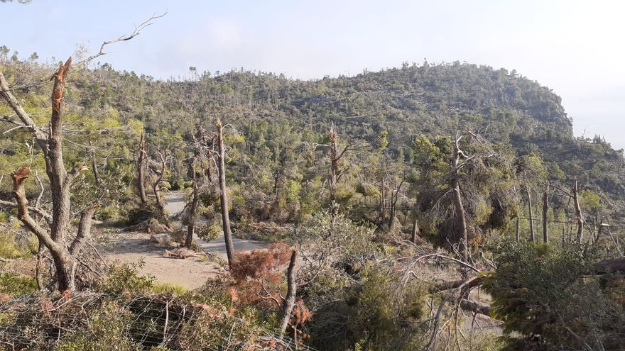 Francina Armengol visita la 'zona cero' de la catástrofe ambiental en Banyalbufar