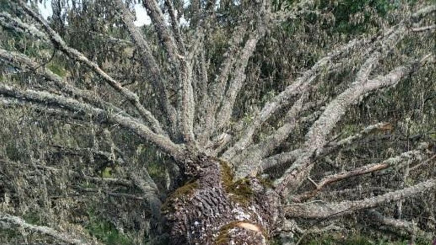 Ecologistas en Acción Zamora denuncia la tala masiva de árboles en Manzanal de Arriba