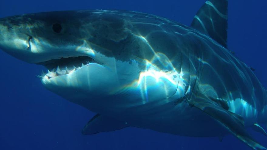 Un tiburón muerde a una niña de 10 años en una playa de Florida