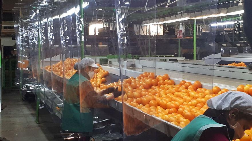 La mayor demanda de cítricos por la covid eleva un 19 % los precios en la UE