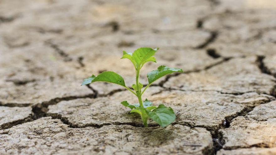 Descubren cómo las plantas se adaptan a las sequías