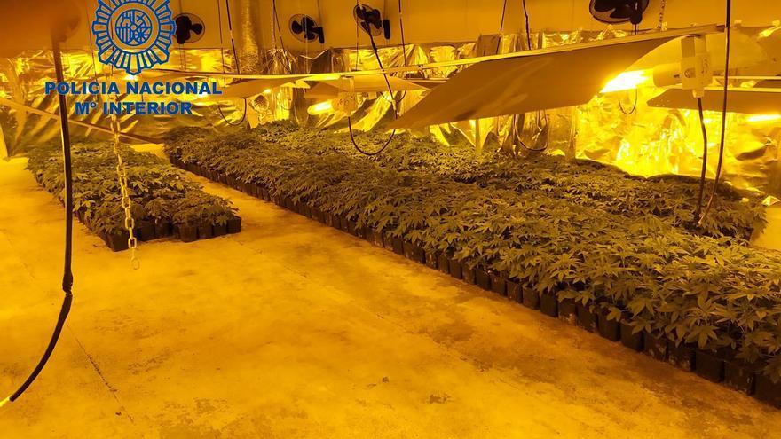 Desarticulada una plantación de marihuana junto a un colegio y una guardería en València