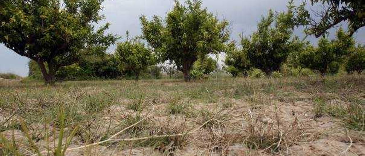 Llombai, Alfarp y Catadau exigen un pacto que asegure el riego de sus cosechas