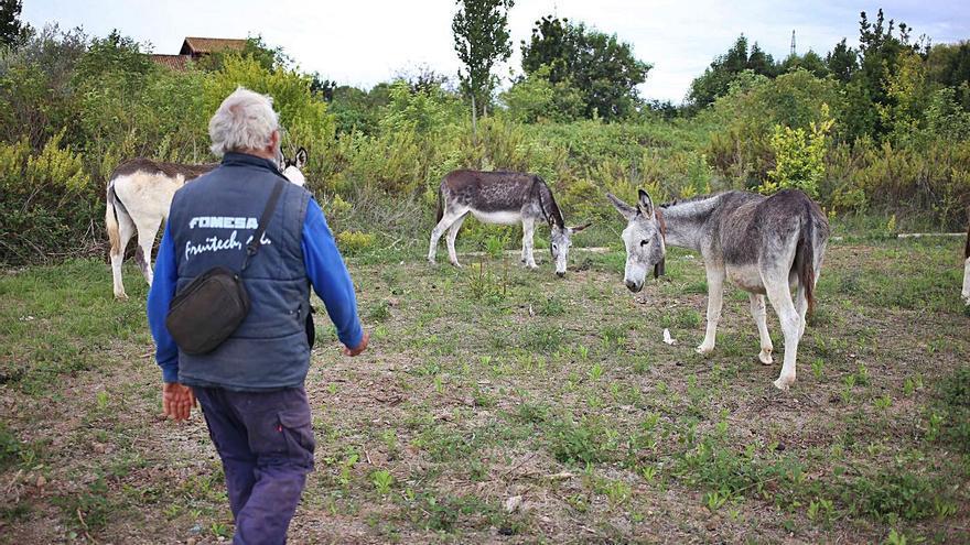 El director del Desert actuó a espaldas de la Conselleria en la gestión de los burros antiincendios