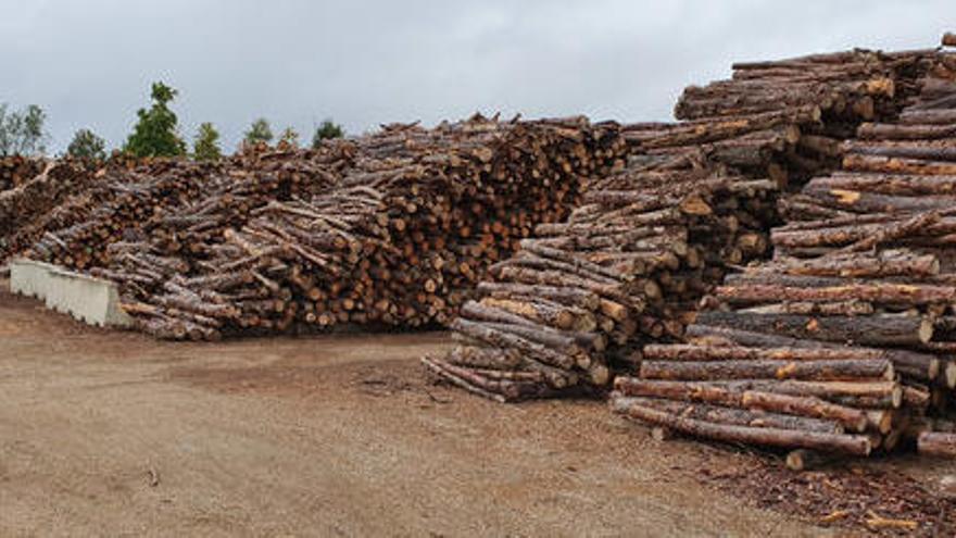 El consum de biomassa es quintuplica a les comarques de Girona els darrers anys