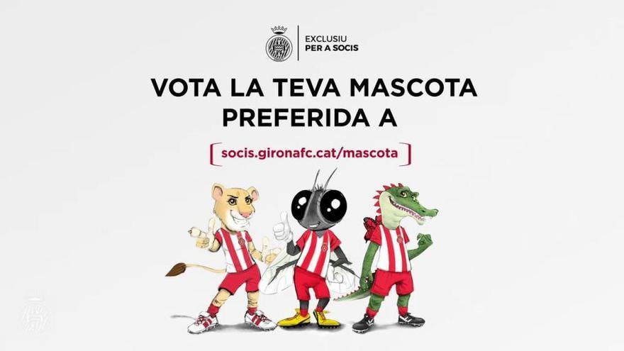 Vídeo: El Girona busca nova mascota