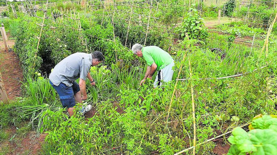 Vila-real acercará las semillas autóctonas a toda la ciudadanía
