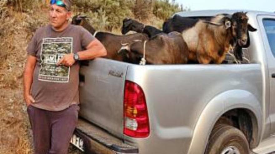 PACMA reclama al Gobierno canario un plan para evacuar animales en incendios
