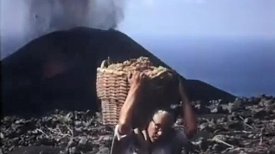 Vendimia bajo el volcán Teneguía