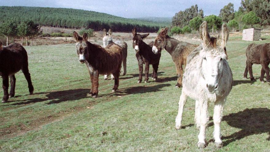 ¿Por qué los burros del Desert de Les Palmes previenen los incendios?