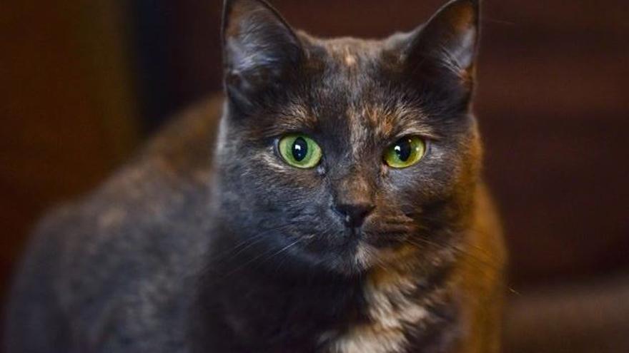ERC insta el Consell a eliminar els testos d'immunodeficiència que es feien als gats de les colònies