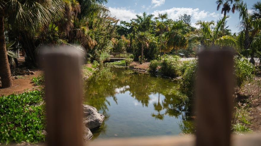 Tripadvisor coloca  al Palmetum entre las mejores atracciones  a nivel internacional