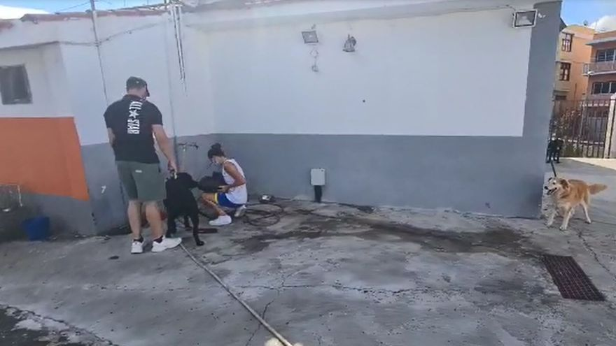 Operación evacuación de animales como consecuencia del volcán de La Palma