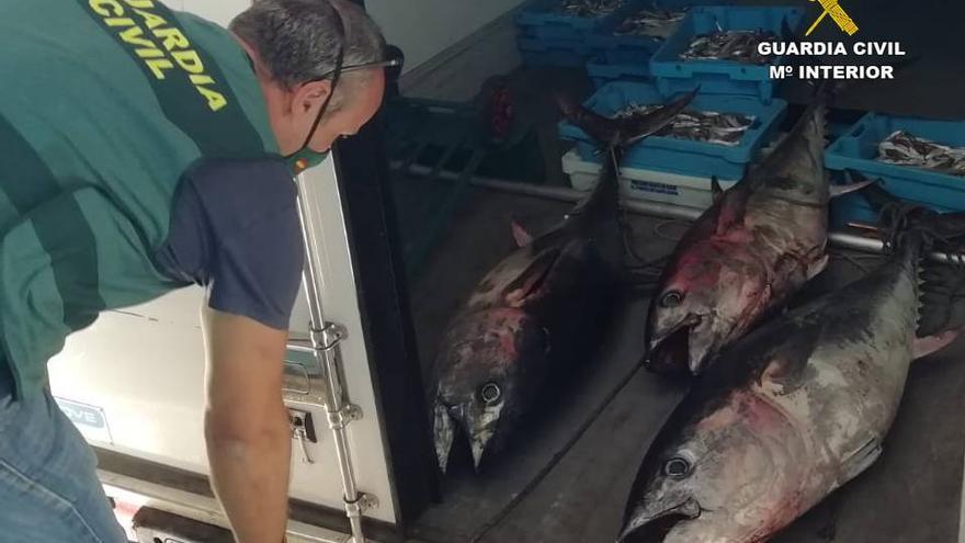 Localizan en Altea y La Vila más de 300 kilos de pescado extraído de forma ilegal