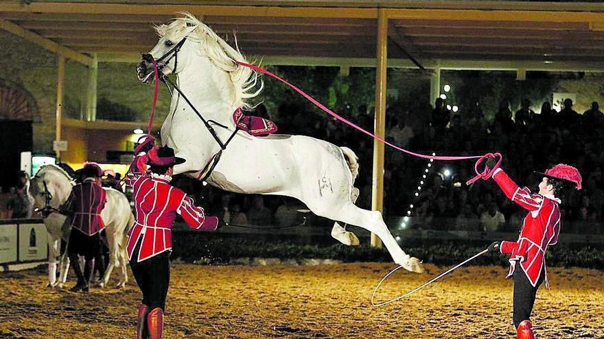 Córdoba Ecuestre: El caballo, embajador de Córdoba