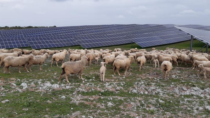 Projectes renovables que afavoreixen al sector primari