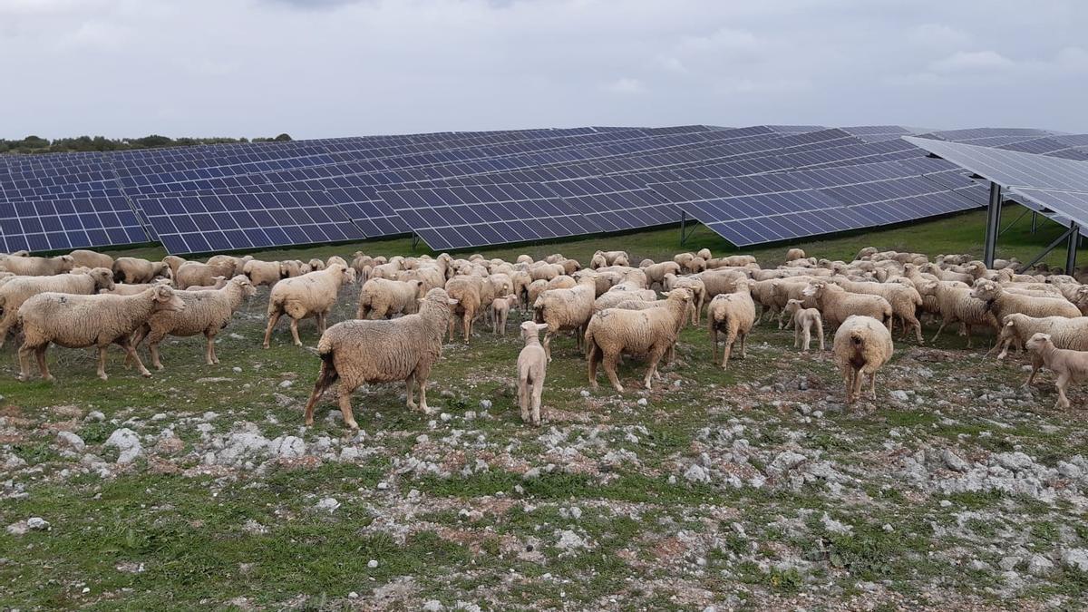 La companyia aposta per combinar plantes de generació fotovoltaica amb activitats agrícoles, hortícoles i ramaderes.