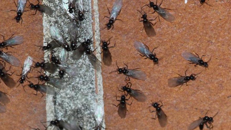 """Entramos en el peor hotel de España: """"vergonzoso, pésimo y sin control ninguno, sin tele y con hormigas"""""""