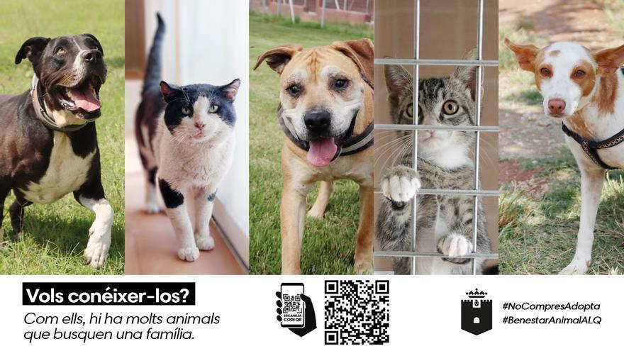 Alaquàs promueve la adopción de animales